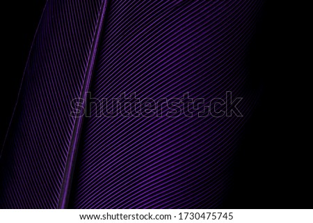 Blue and Purple Feathers,Feather, Purple, Textured, Fashion, Macrophotography,Blue and Purple Feathers,Macaw Parrot bird feathers as background, macro,Parrot feather macro texture, Abstract, Animal,