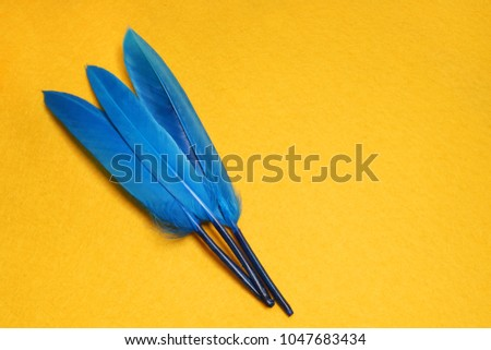 Blue and yellow feathers. Carnival. Colored feathers.