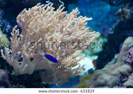 ... fish on tropical fish tank with coral on the background - stock photo