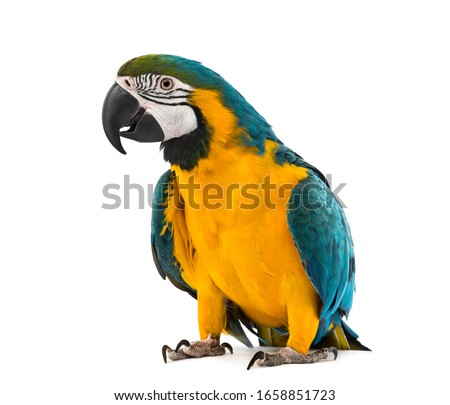 Photo of  Blue and yellow Macaw in front