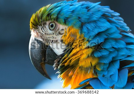stock photo blue and yellow macaw lat ara ararauna close up 369688142 - Каталог — Фотообои «Животные»