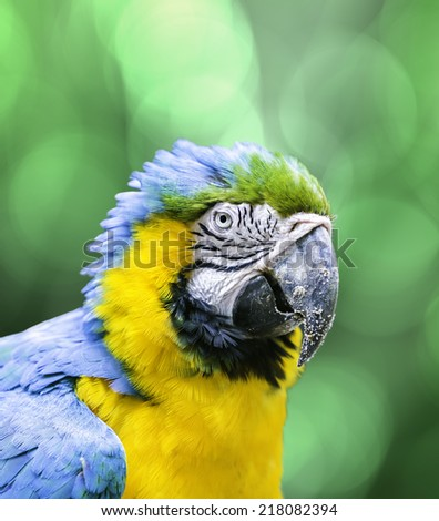 blue and yellow macaw on green...