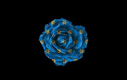 Blue and yellow rose isolated on black background. Yellow and blue rose isolated on black background. Blue and yellow floral background. Yellow and blue floral background.