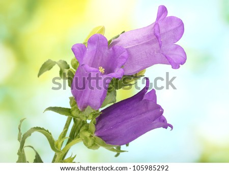 blue bell flowers on green background