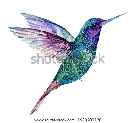 blue bird Hummingbird.watercolor illustration on an isolated white background Stock photo ©