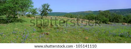 Blue Bonnets in Hill Country, Willow City Loop Road, Texas