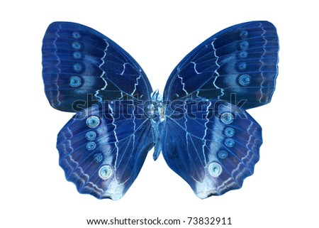 blue butterfly isolated on white background
