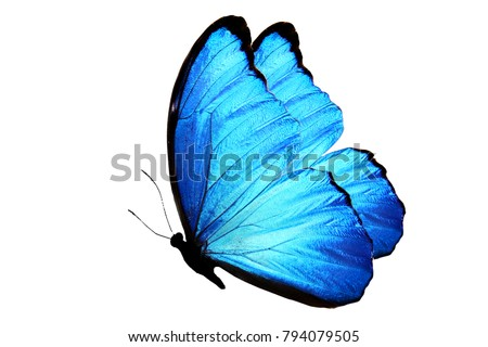 blue butterfly isolated on white. side view #794079505