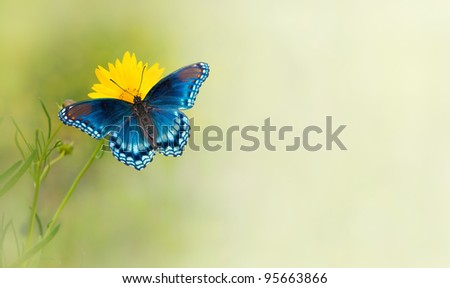 stock-photo-blue-butterfly-on-yellow-flower-a-business-card-background-design-95663866.jpg