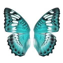 Blue butterfly wing isolated on white background