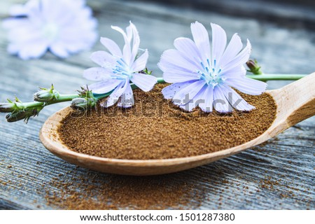 Blue chicory flower and a wooden spoon of chicory powder on an old wooden table. Chicory powder. The concept of healthy diet drink. Coffee substitute. Foto stock ©