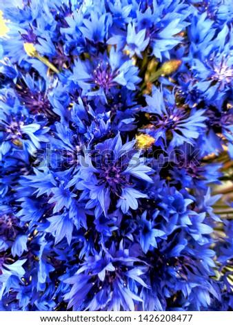 Blue closeup cornflowers, cornflower texture #1426208477