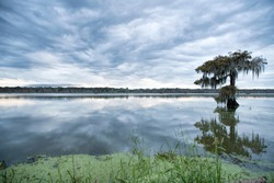 Blue Cloudy Skies Over Lake Martin with Mossy Cypress Tree, All Reflected in the Still Waters