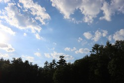 blue cloudy sky with dark green evergreen trees in bottom of picture with trees at bottom of landscape picture in summer in New England