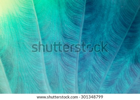Blue color leaf pattern with selective focus