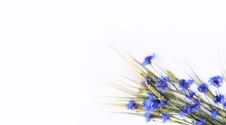 Blue cornflowers and wheat spikelets on a white background. Floral arrangement in a rustic style. Background for a greeting card.