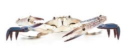 blue crab isolated on white background