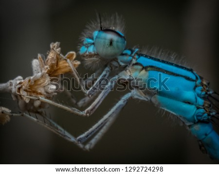 Blue Damselfly Beautiful  Macro Natural Insect Predator #1292724298
