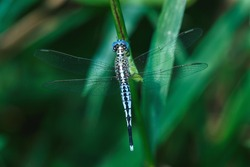 Blue dragonfly, dragonflies, insects.