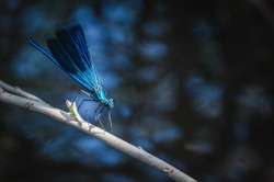 Blue dragonfly near the lake. Beautiful composition in blue
