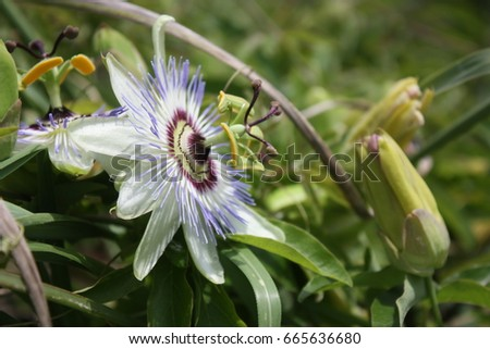 Blue exotic flower #665636680