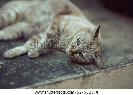 blue eyed cat on concrete