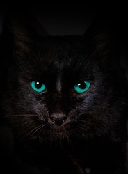 blue eyes black cat dark