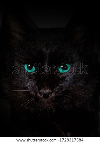 blue eyes black cat dark Foto stock ©