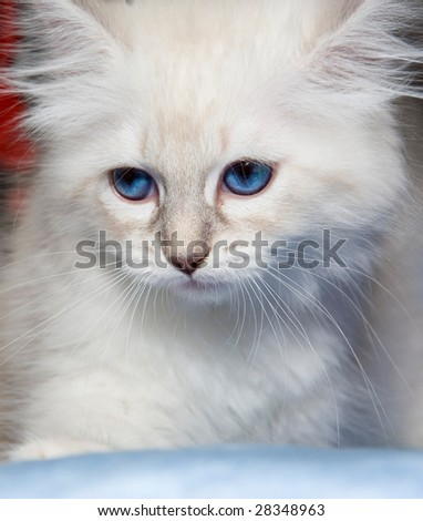 stock photo : Blue eyes white