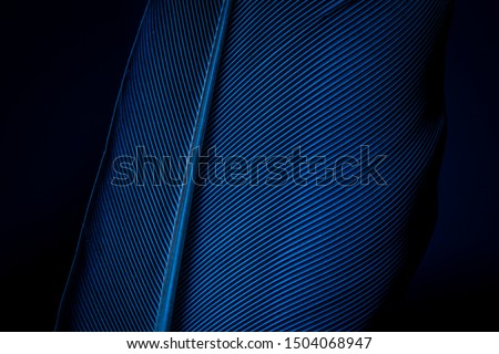 Blue feather,Macro shot a bird feather close-up in Black background,Feather, Bird, Animal, Australia, Macrophotography,Close-up peacock feathers