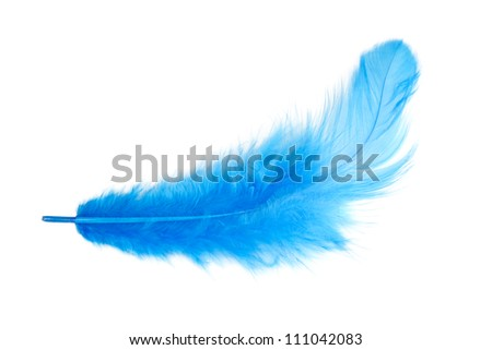 blue feather on a white background. isolated