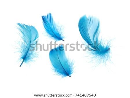 Blue feathers isolated on white background
