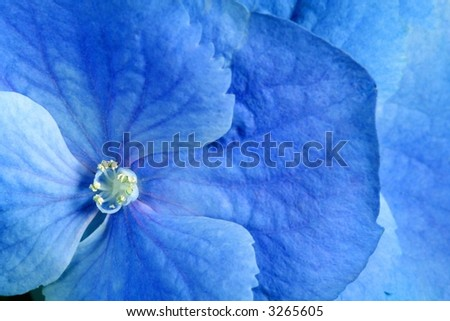 Blue flower. Background for card