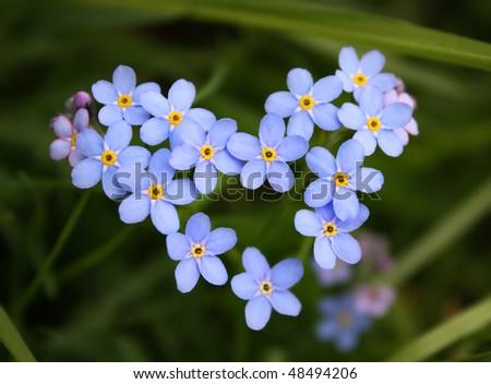 Blue flower. Heart