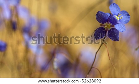 Blue flower macro closeup - stock photo
