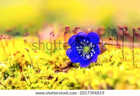 Blue flower on yellow view. Blue flower. Blue on yellow flowering