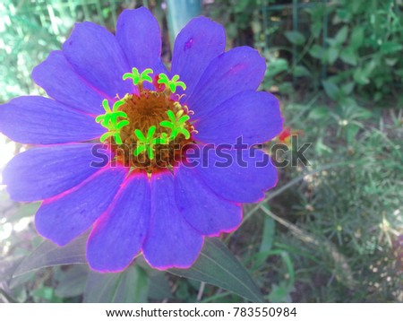 Blue flower with green stamens and green leaves #783550984