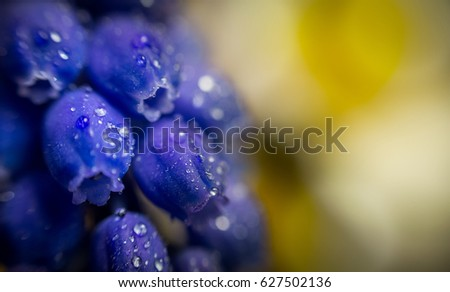 Blue flower with water drops macro photography