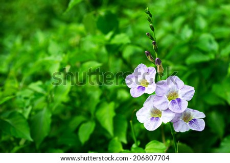 Blue Flowers in the garden  purple landscaping garden design bouquet florist fall colorful weather public outdoors home classic house cheerful beautiful background fresh blossoms