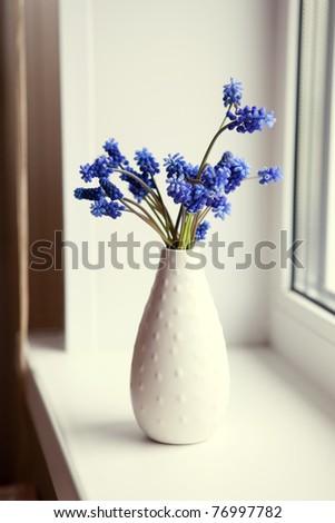 Blue flowers in the window/Muscari
