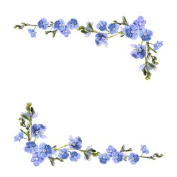 blue flowers isolated on white background