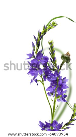 blue flowers with green leaf isolated over white