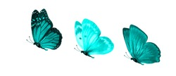 blue flying tropical butterflies. insects for design.