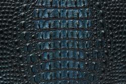 Blue freshwater crocodile bone skin texture background.