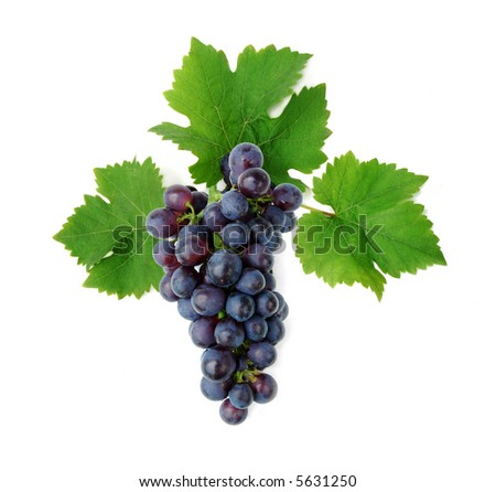 Blue grape cluster with leaves - stock photo
