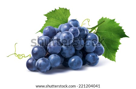 Blue grapes dry bunch isolated on white background as package design element #221204041