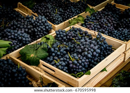 Blue Grapes in brown wood box #670595998