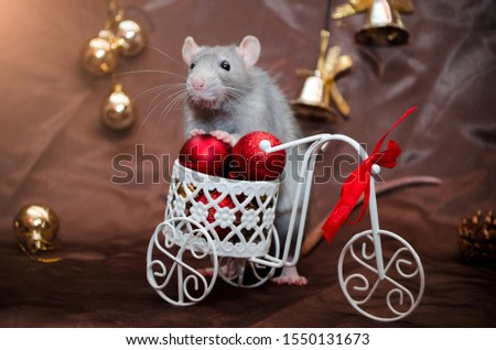 Blue gray cute rat sits on a bicycle with red balls and ribbon, in New Year decorations with bells, on a brown background with a copyspace for a postcard