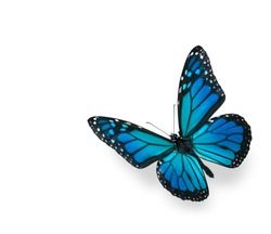 Blue Green Butterfly Isolated on White