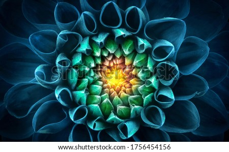 Blue-green chrysanthemum flower close-up. Macro shot. Summer and spring multi-color floral background. Foto d'archivio ©